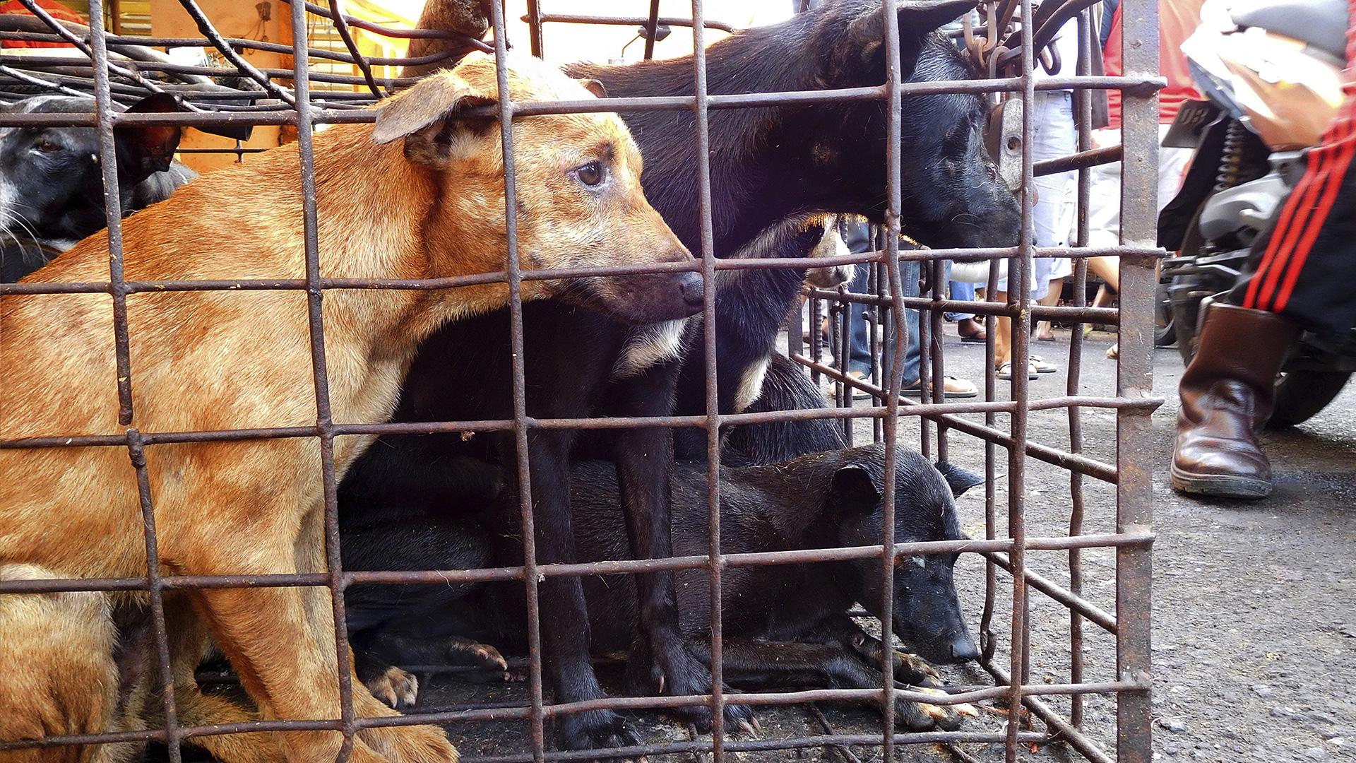 Auf einem Tiermarkt soll das Corona-Virus auf Menschen übergesprungen sein. © Picture Alliance / AP