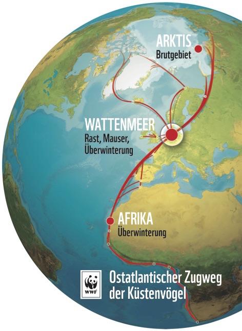 Das Wattenmeer liegt auf dem sogenannten ostatlantischen Zugweg der Zugvögel
