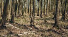 Wald Dürre: Ausgetrockneter Waldboden