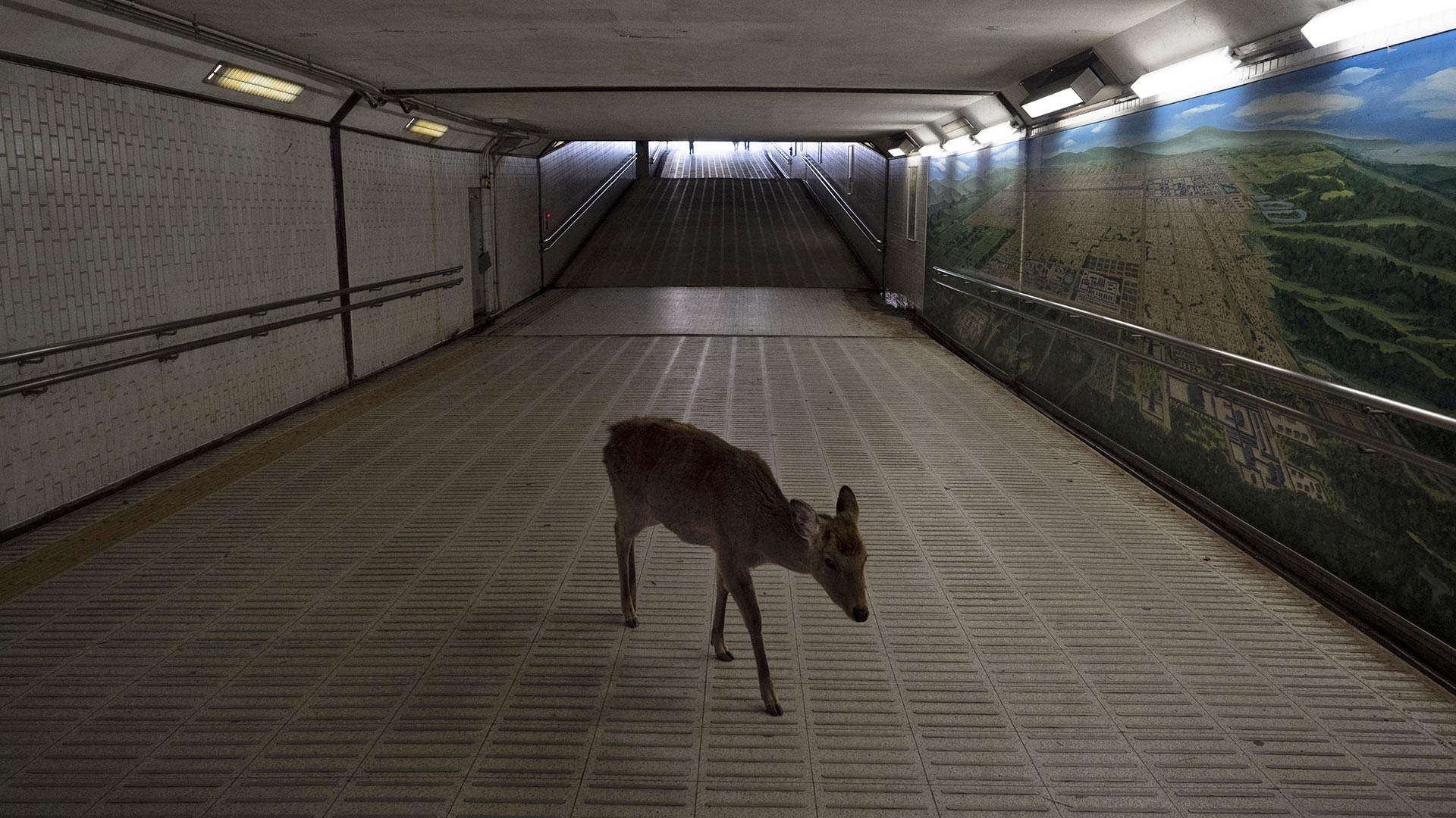 Corona: Hirsch in der Ubahn Tokio