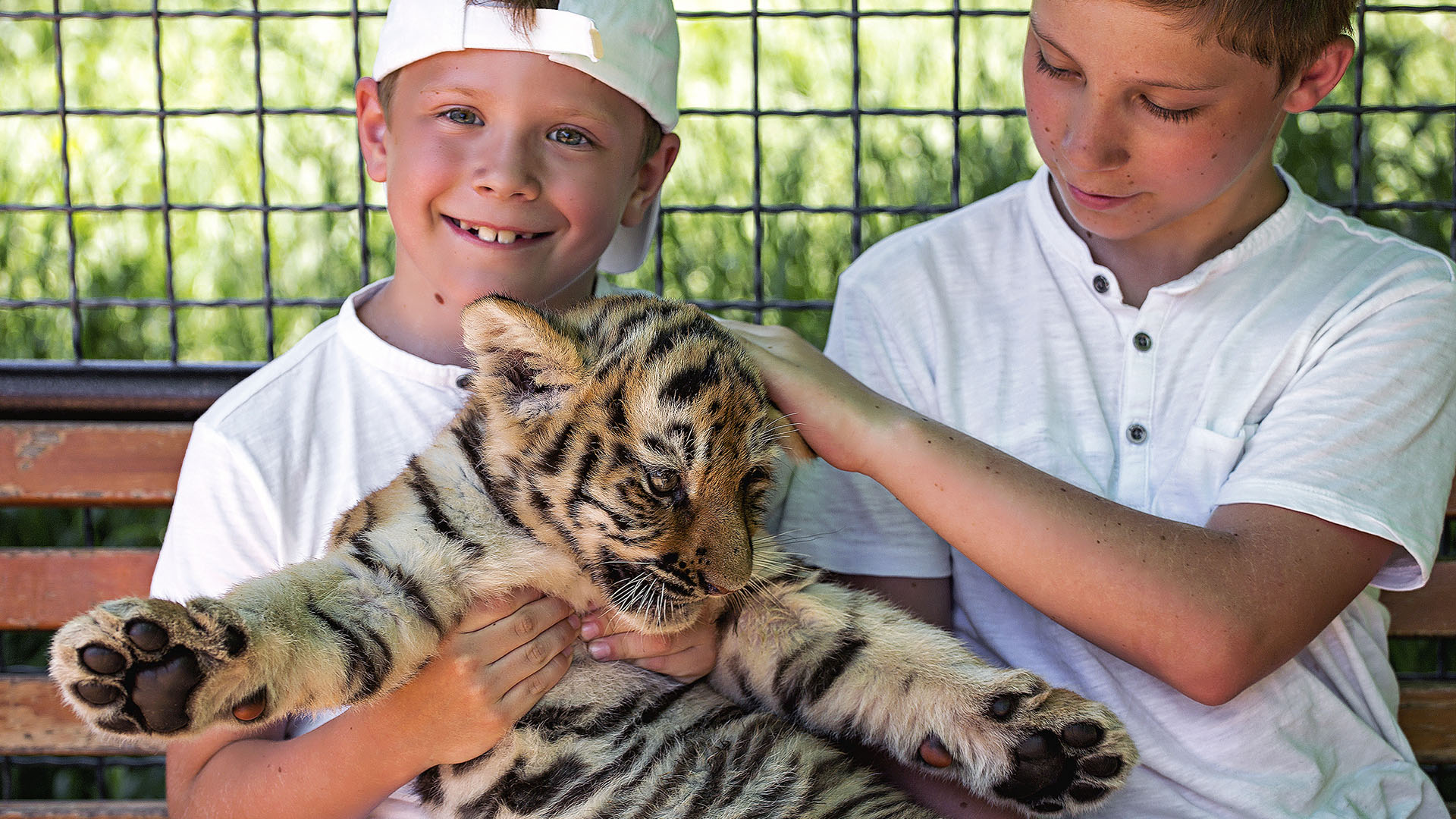 Tiger King: Jungen streicheln Tiger