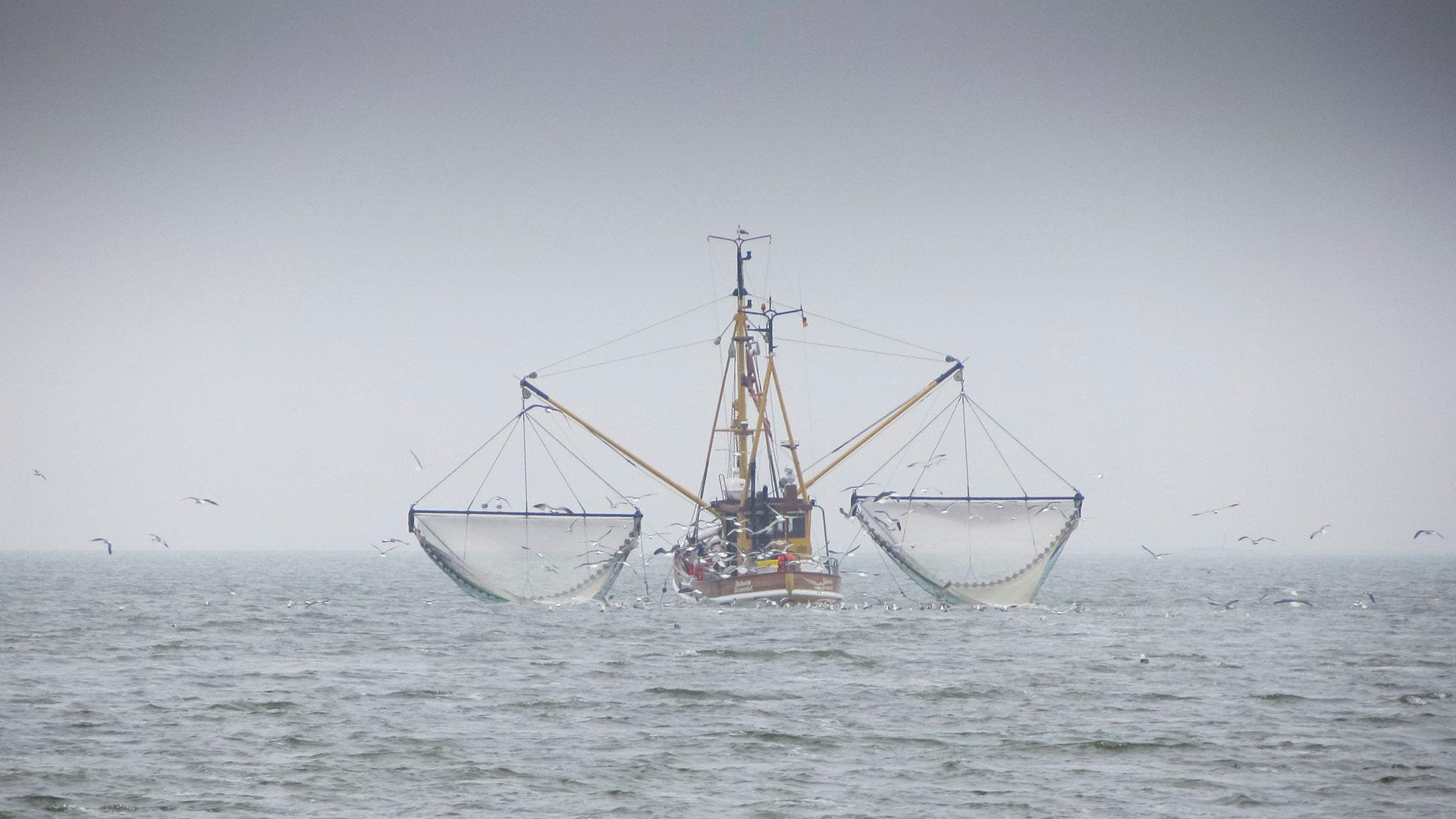Nordsee Schutz: Trawler fischen auch in Schutzgebieten