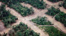Wald und Corona: Entwaldung im Luftbild