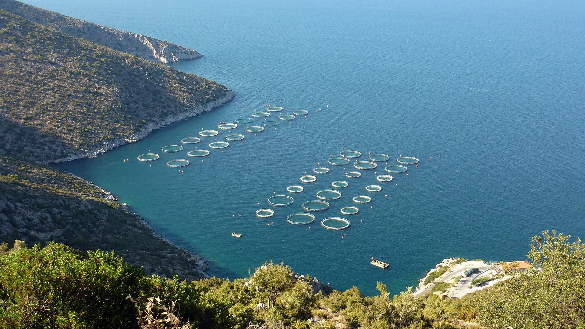Fisch essen: Aquakultur im Mittelmeer