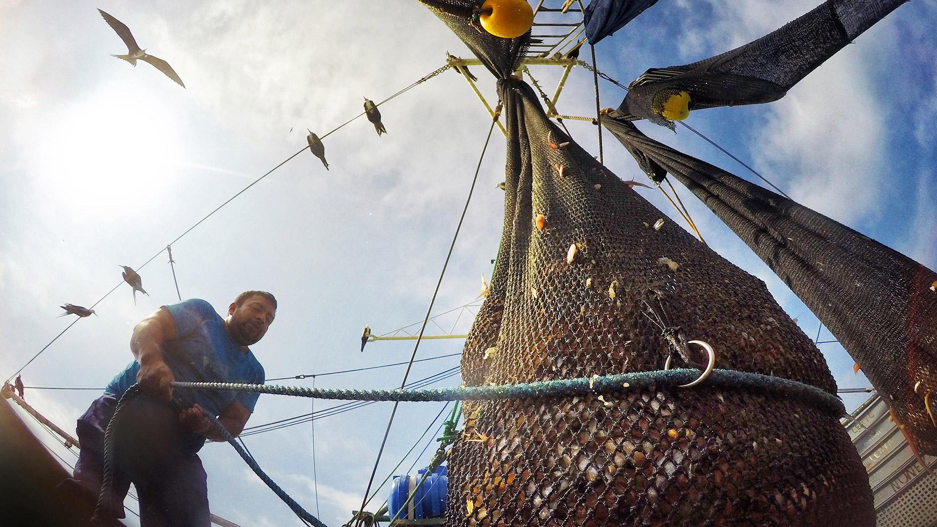Warum wir weniger Fisch essen sollten - volles Fischernetz als Symbol für die Überfischung