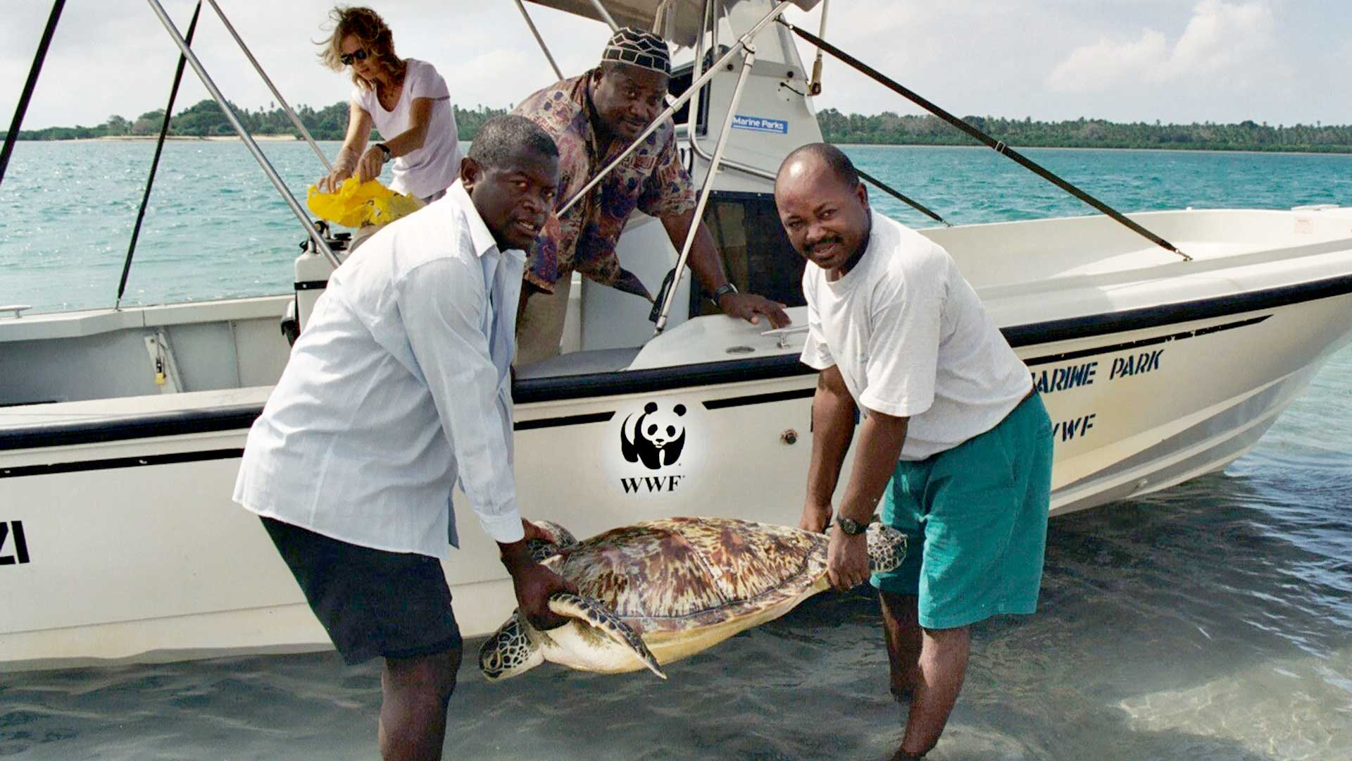 Meeresschildkröte durch den WWF gerettet