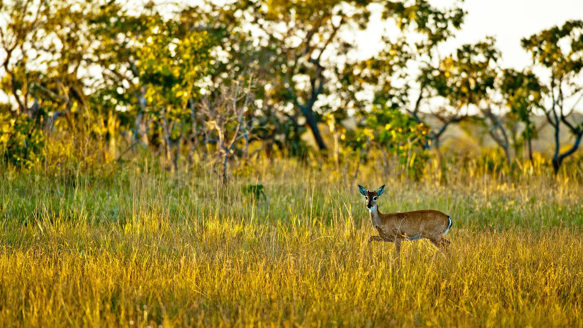 Cerrado: Wertvolle Biodiversität