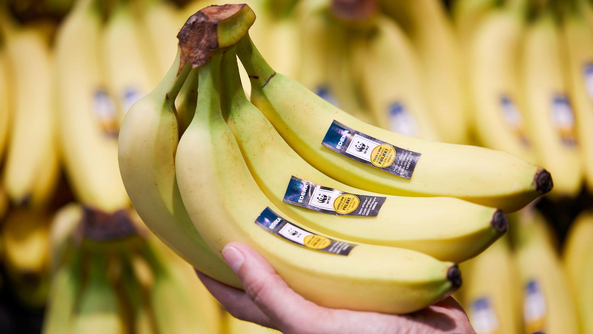 Bananen mit WWF Aufkleber im Edeka Supermarkt