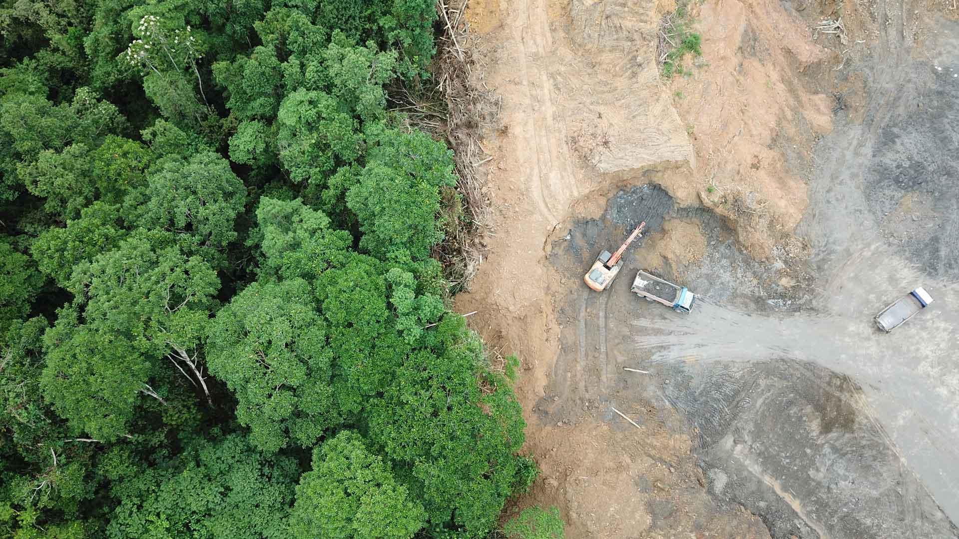 Banken können Entwaldung vorantreiben - oder das Gegenteil tun. Entwaldungsschneise auf Borneo Luftbild