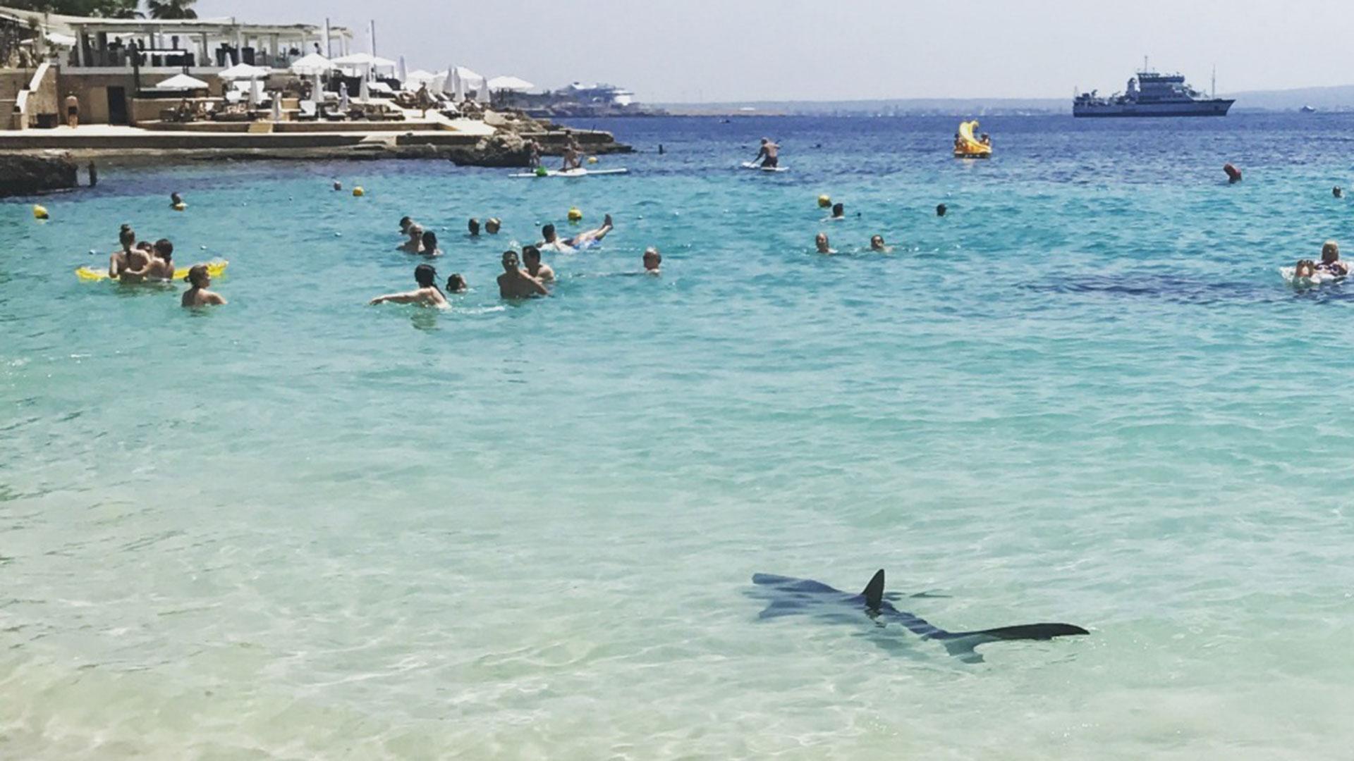 Hai an Badestrand am Mittelmeer