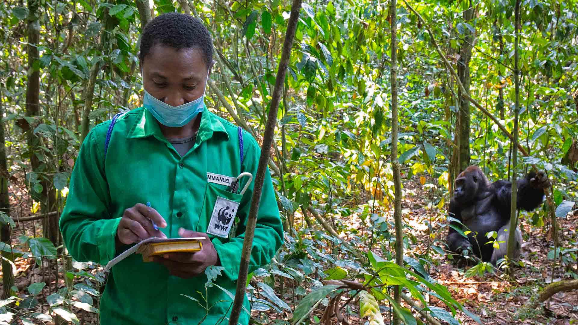 Übertragung von Viren zwischen Wildtieren und Menschen: Menschen können Krankheiten auf Gorillas übertragen, die für sie gefährlicher sind als für uns. Ein Mundschutz ist unerlässlich.