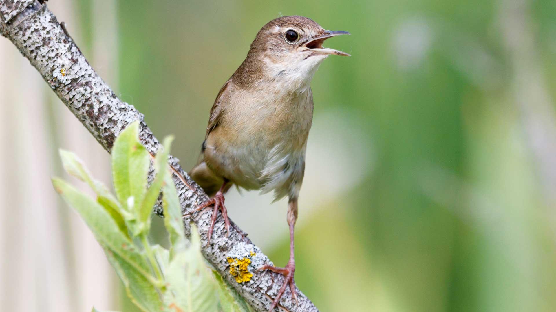Tiere und Hitze: Vogel