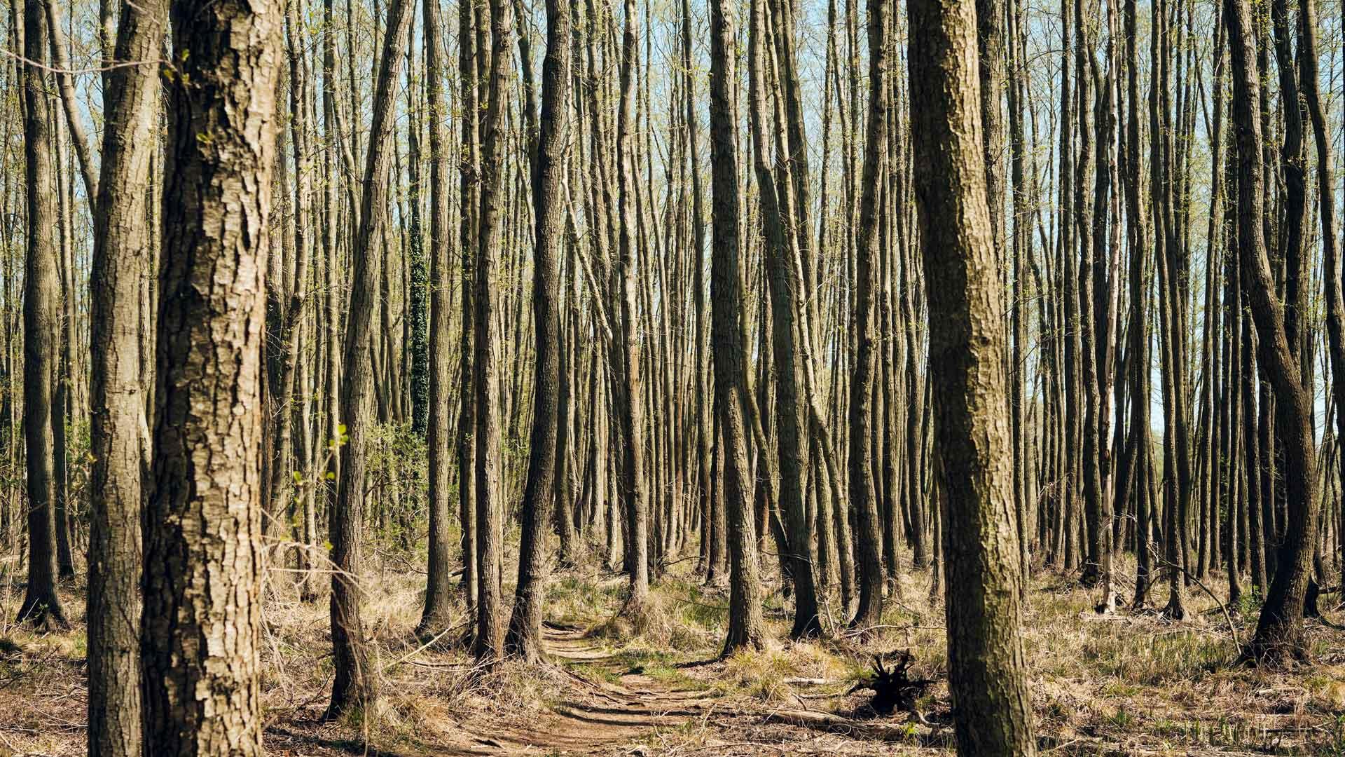 Dürre im Wald