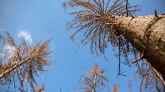 Waldschäden durch Dürre und Schädlinge
