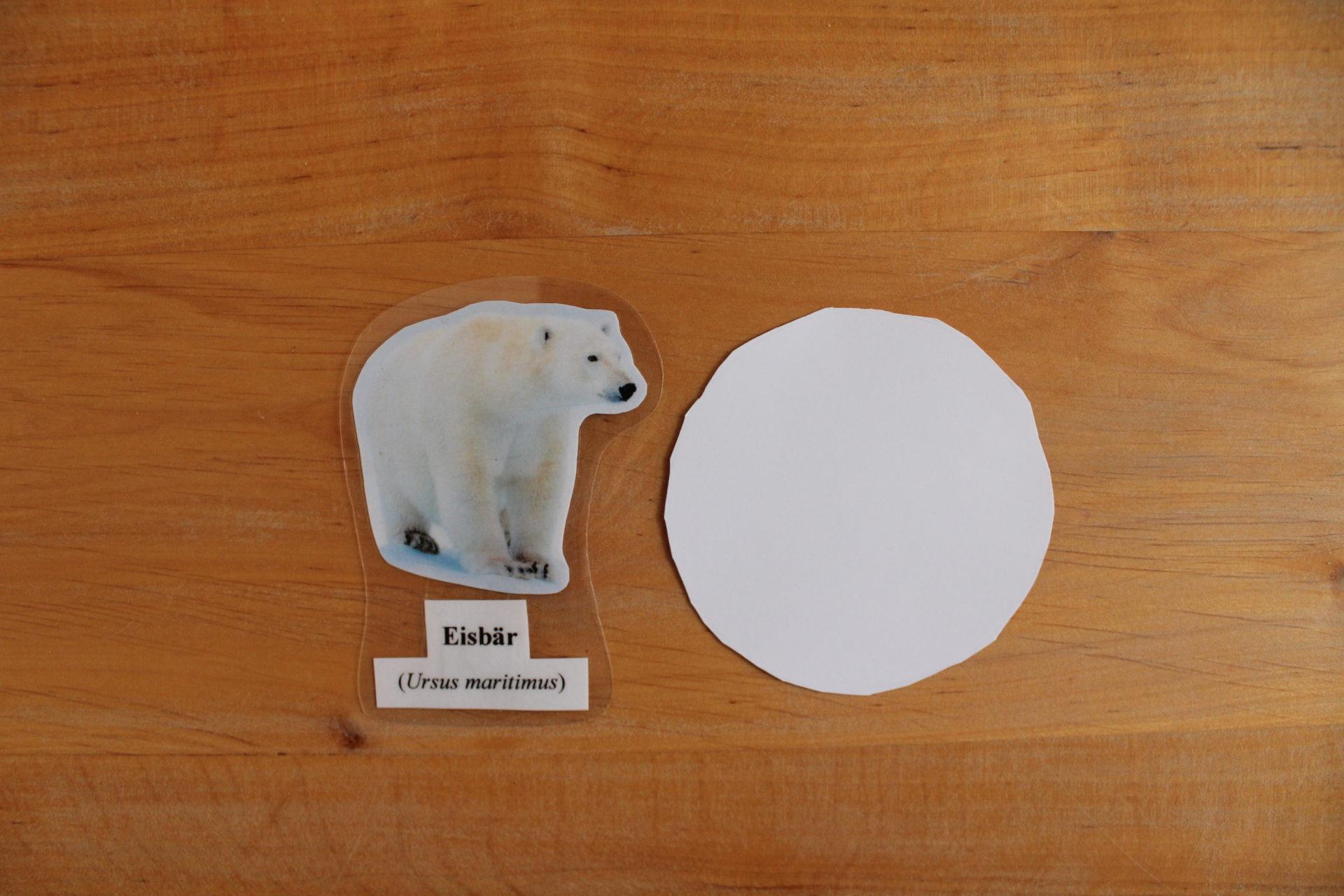 Montessori Material Eisbär