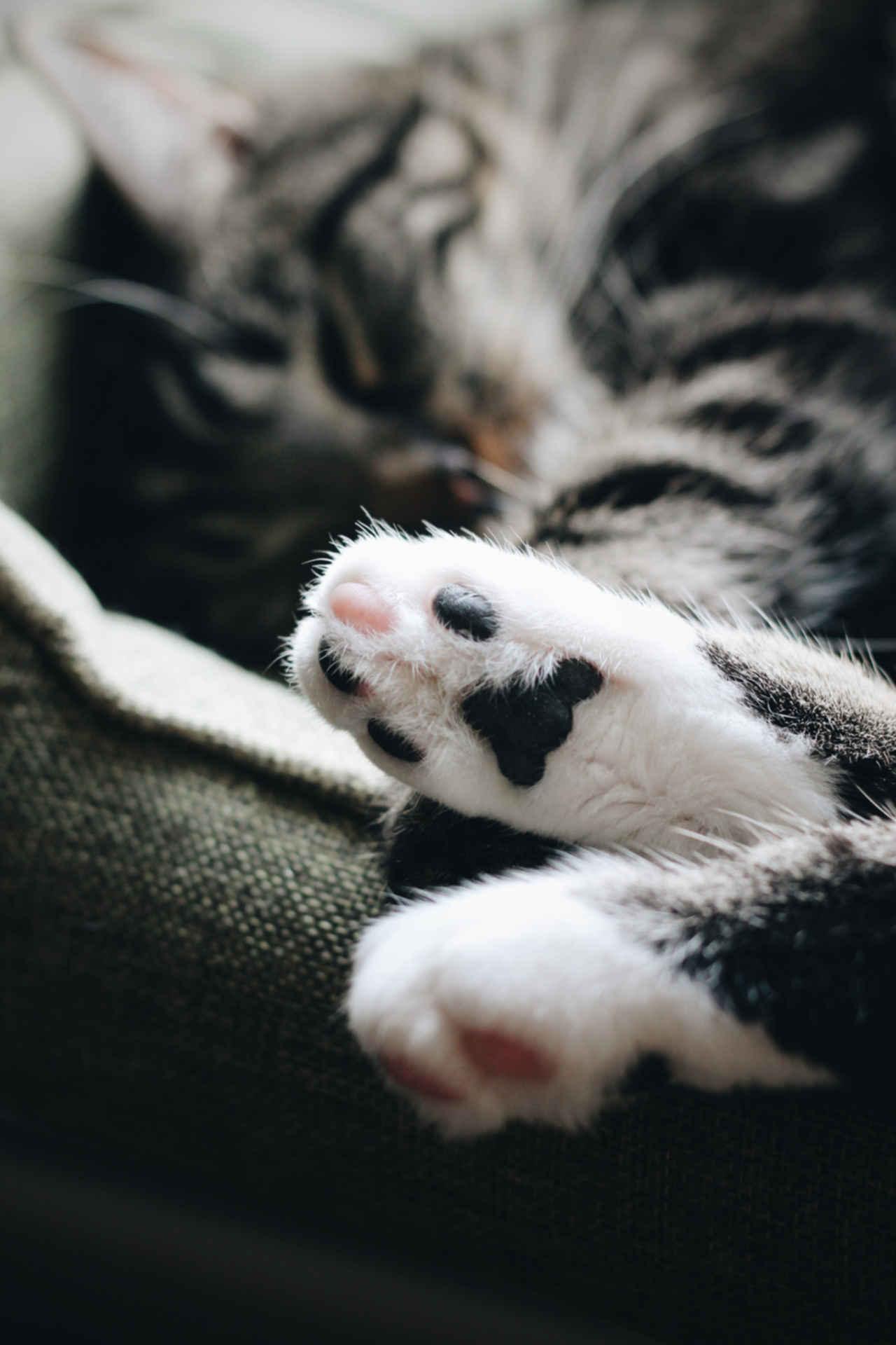 Tiere und Hitze: Katzenfüße