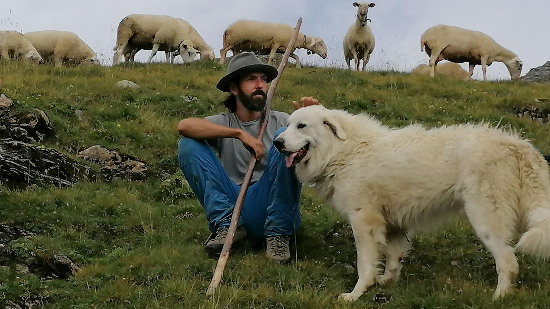 Weidenschutz in der Schweiz: Schäfer mit Weidenschutzhunden Patou (Pyrenäen-Berghund)