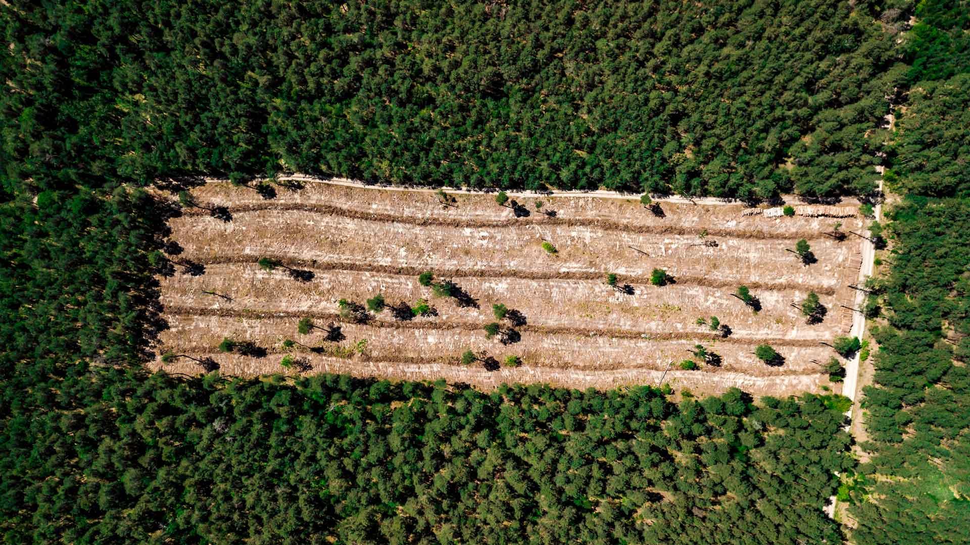 Entwaldung liegt an unserem Konsum