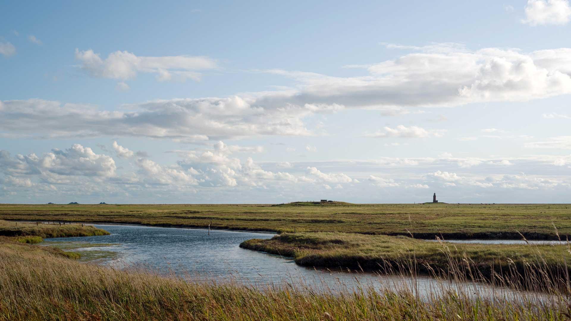 Wattenmeer: mit der App Wadden sea Explorer mehr entdecken
