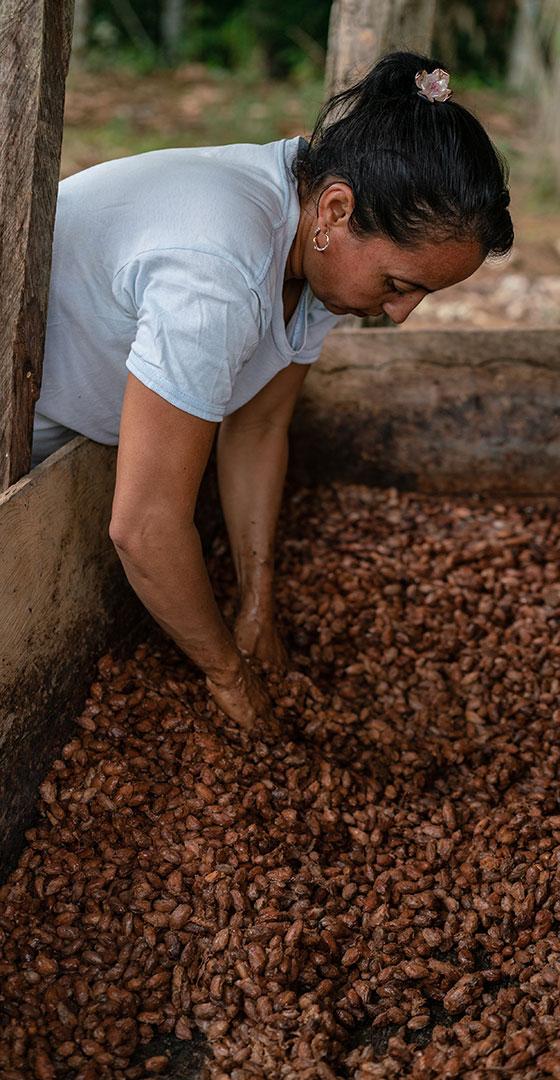 Fairer Kakaoanbau ist auch Waldschutz