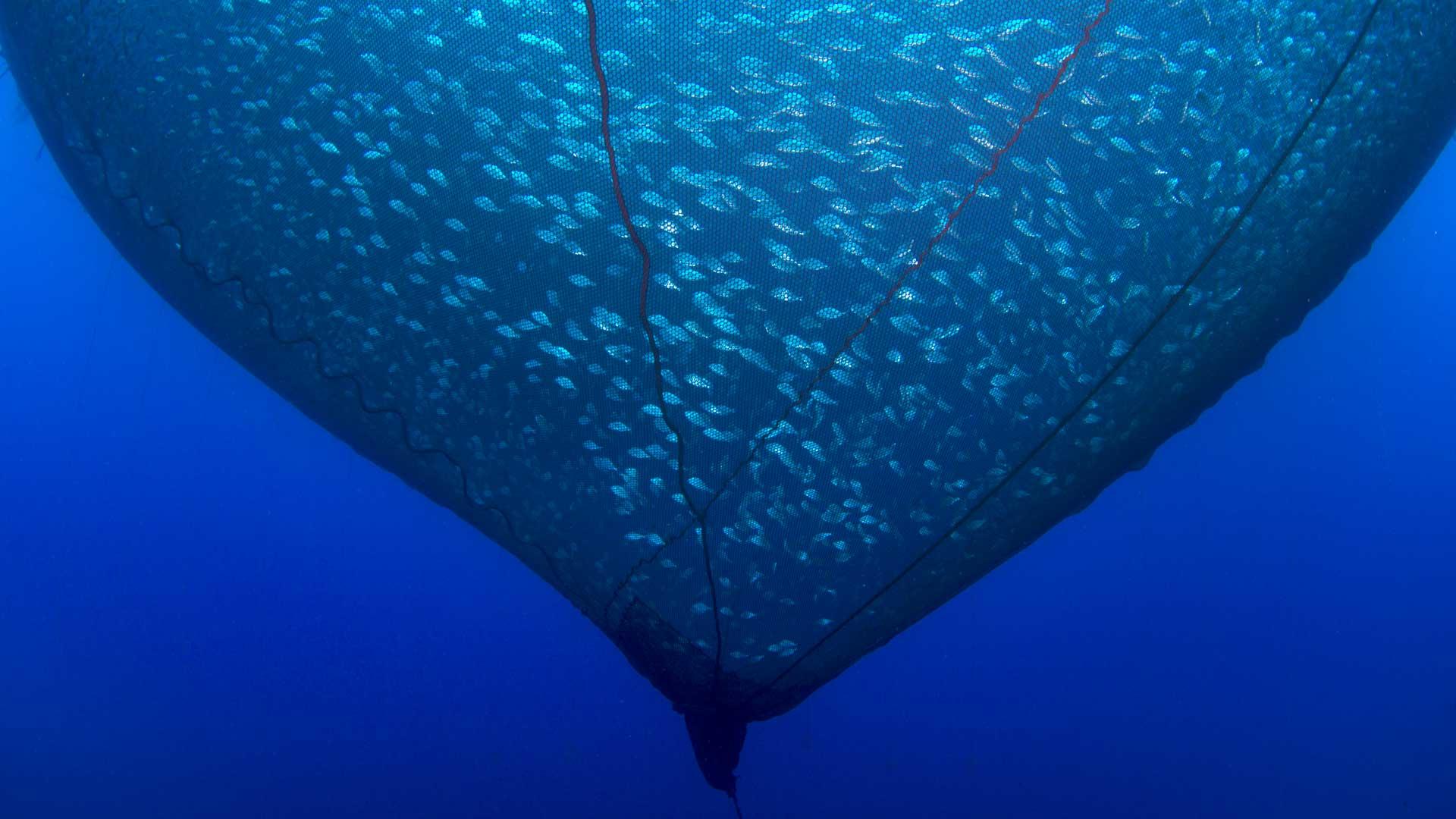 Fischerei-Subventionen befeuern die Überfischung. Es braucht endlich ein Abkommen dagegen. Doch die WTO handelt nicht.