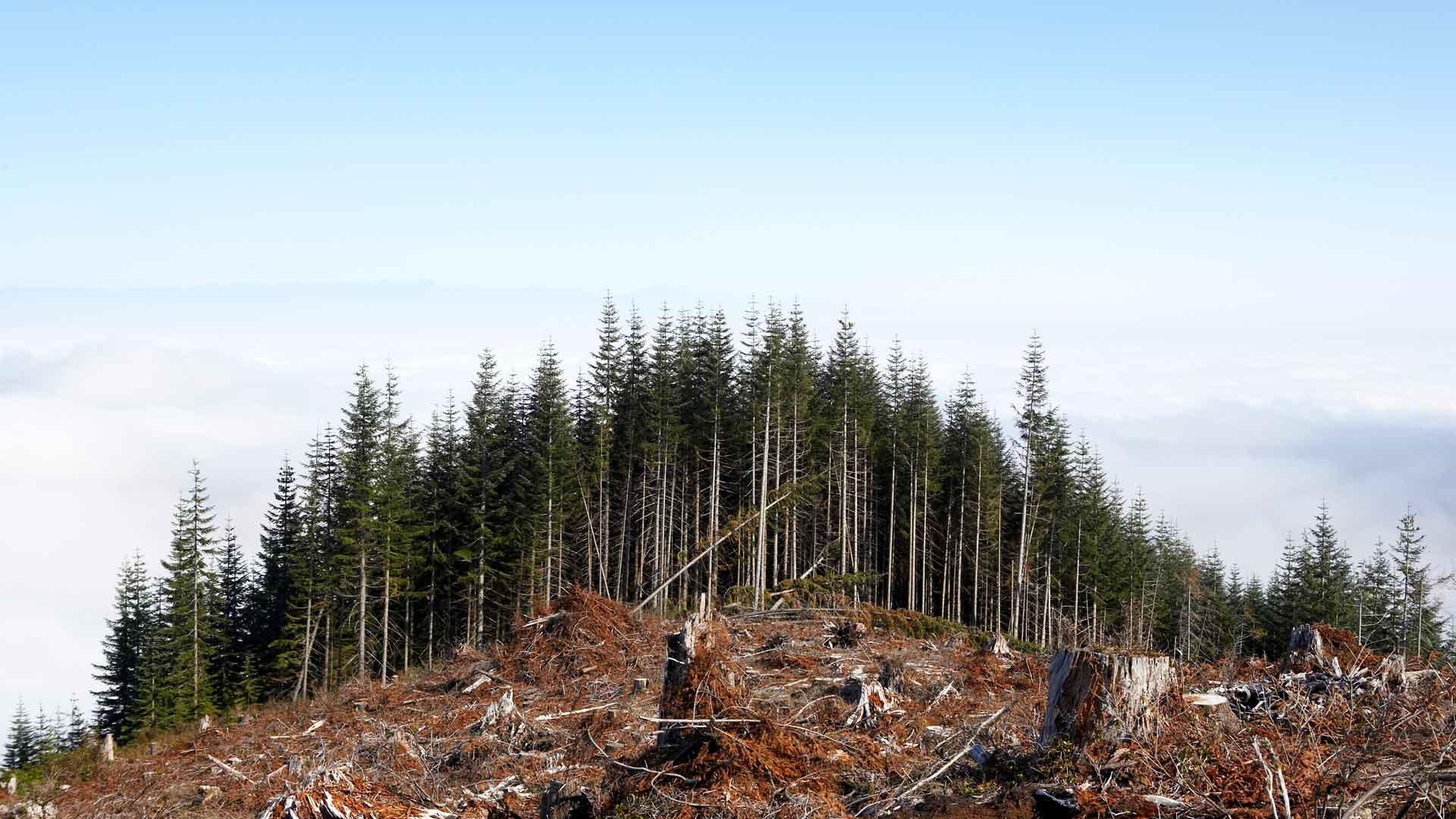 Entwaldung Bergkuppe