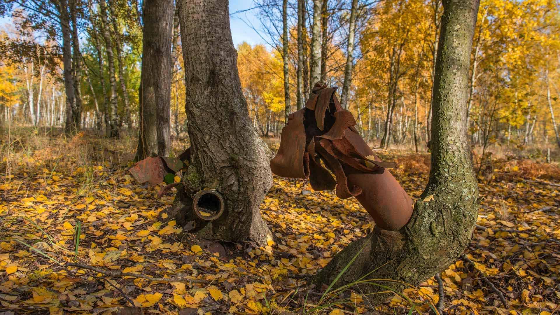Bäume überwuchern Reste von Munition und Kriegsgerät Wildnis in Deutschland: Lieberoser Heide in Brandenburg
