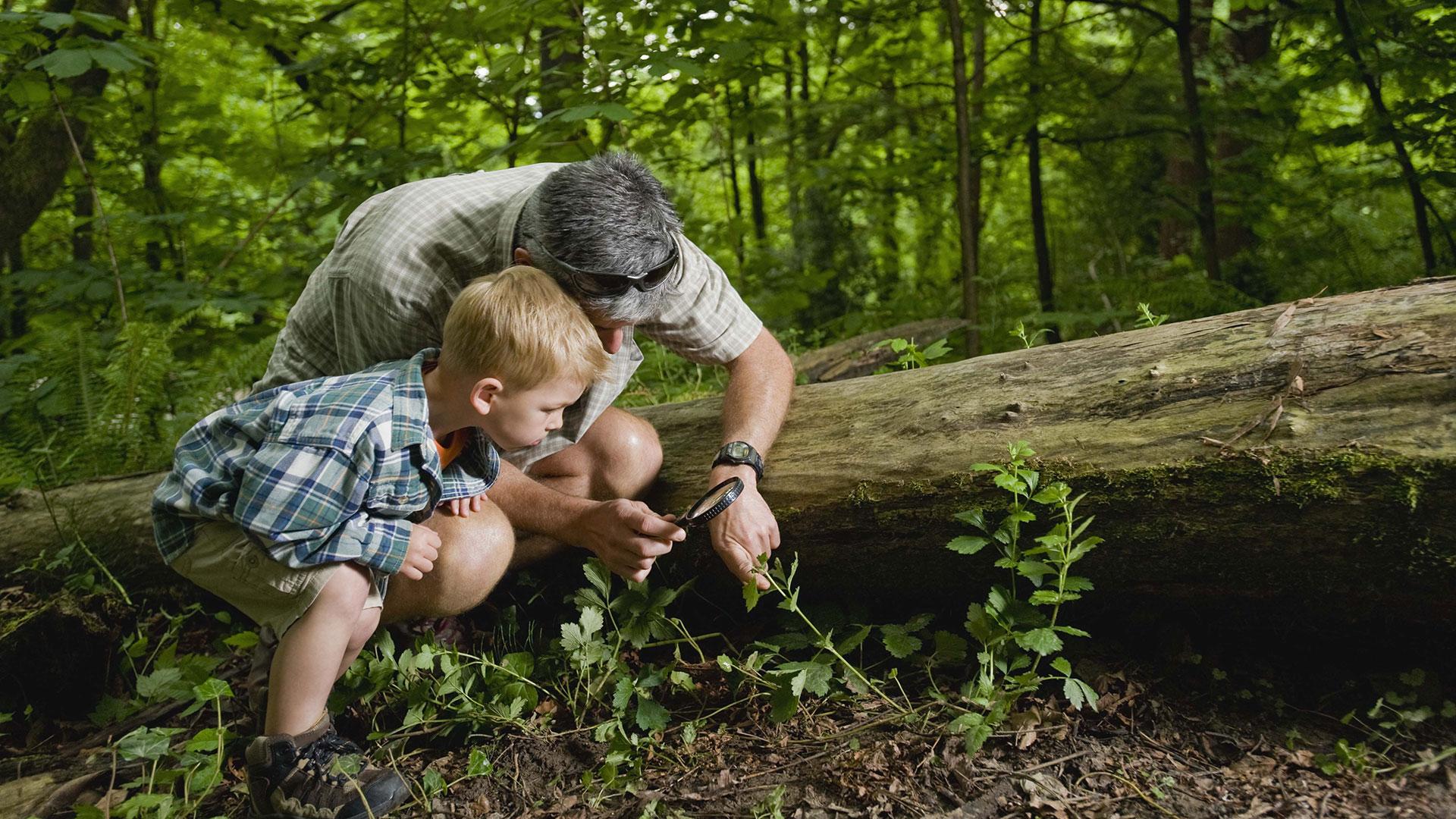 Natur entdecken: Vater mit Sohn im Wald