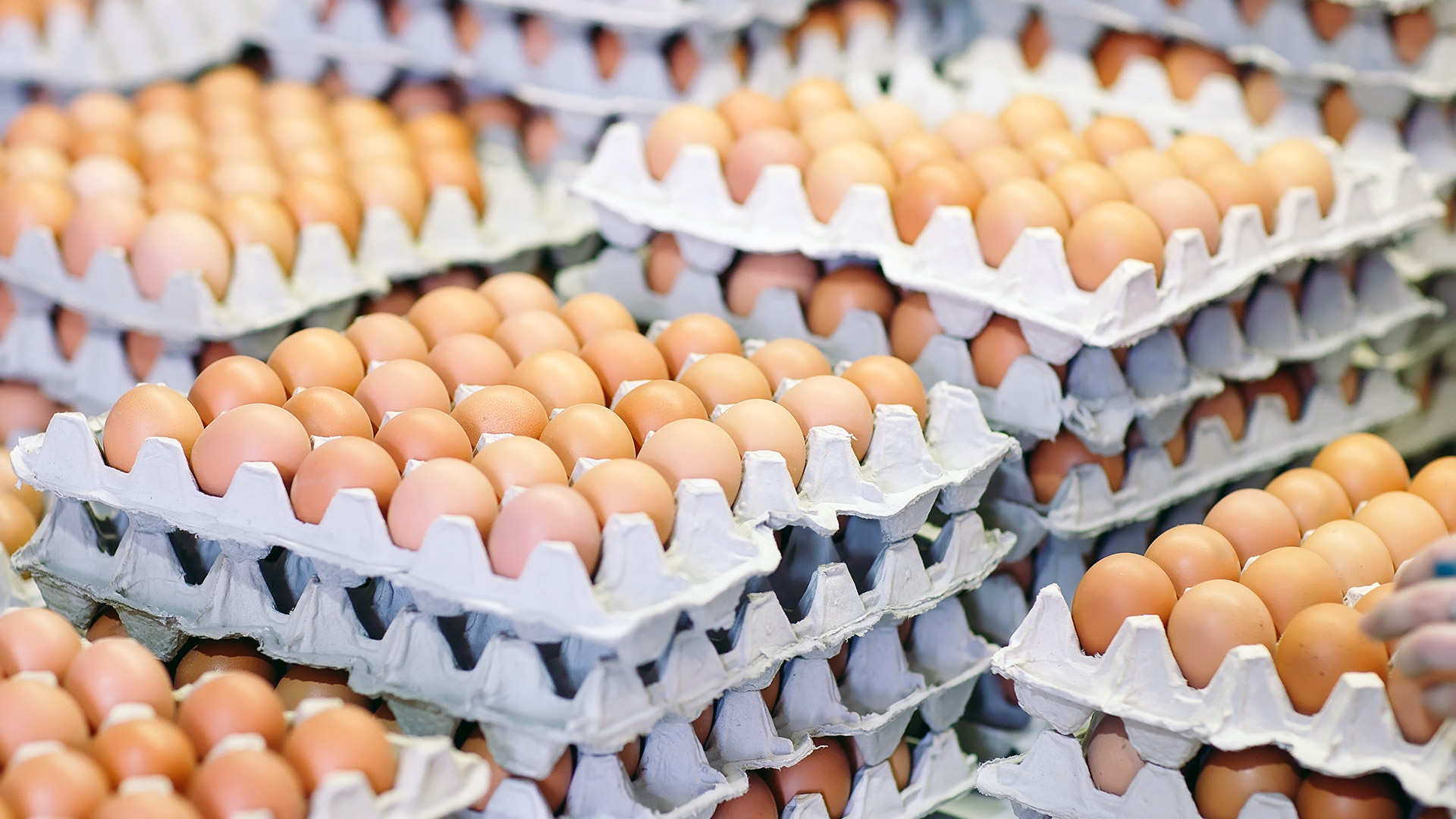 Eier in Kartons