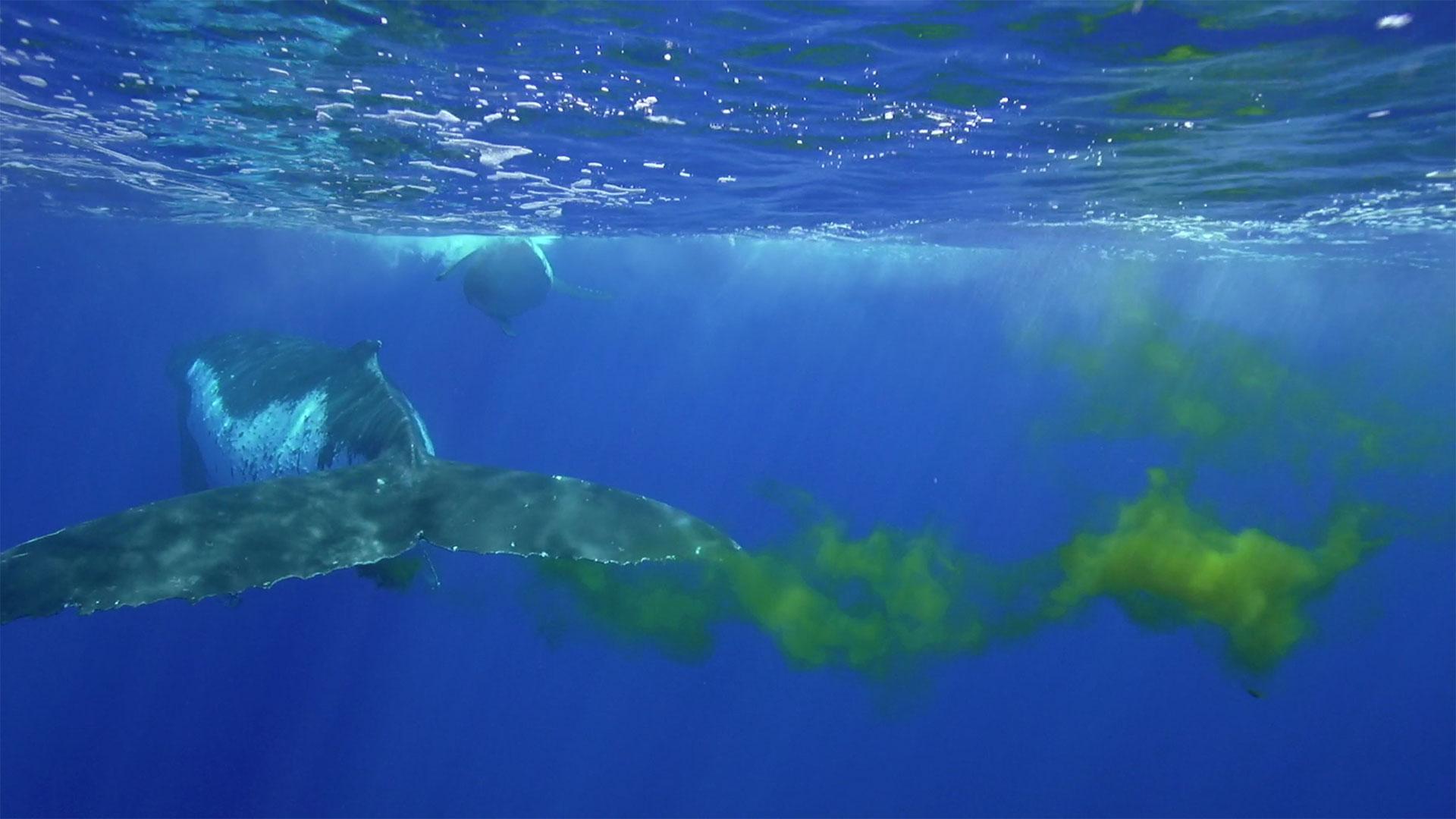Wal kackt ins Meer
