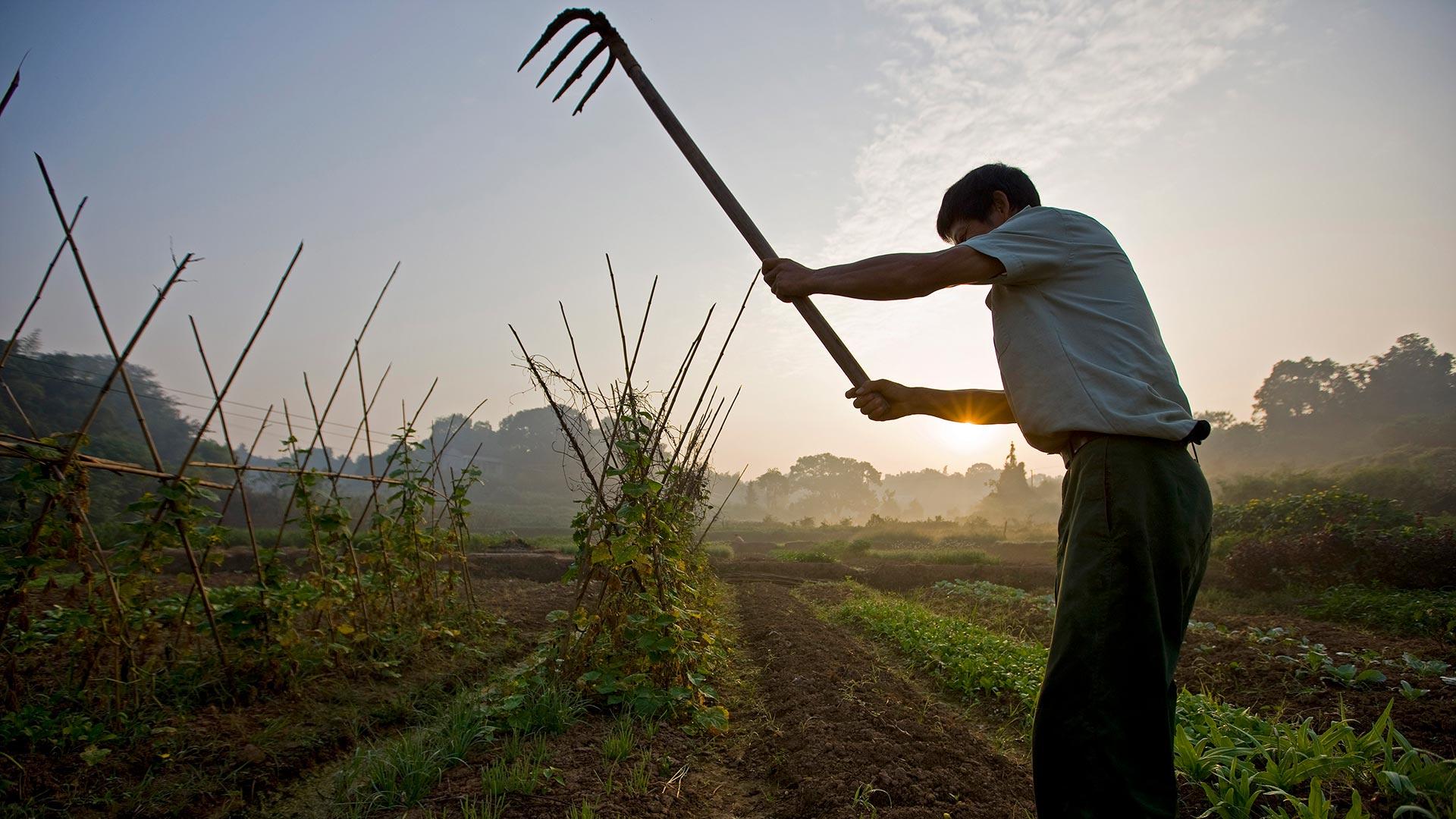 Die kleinbäuerliche Landwirtschaft braucht Investitionen