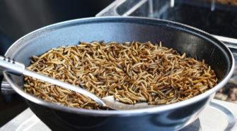 Insekten essen: Mehlwürmer in der Pfanne