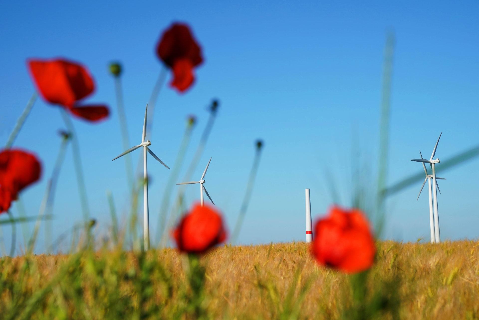 Wo kommt unser Strom der Zukunft her? Wo unsere Energie? Innovative Projekte gibt es schon heute. Der Strom der Zukunft ist lokal und naturverträglich.