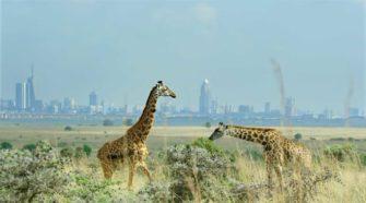 Boundaries Netflix: Giraffen vor Stadtkulisse