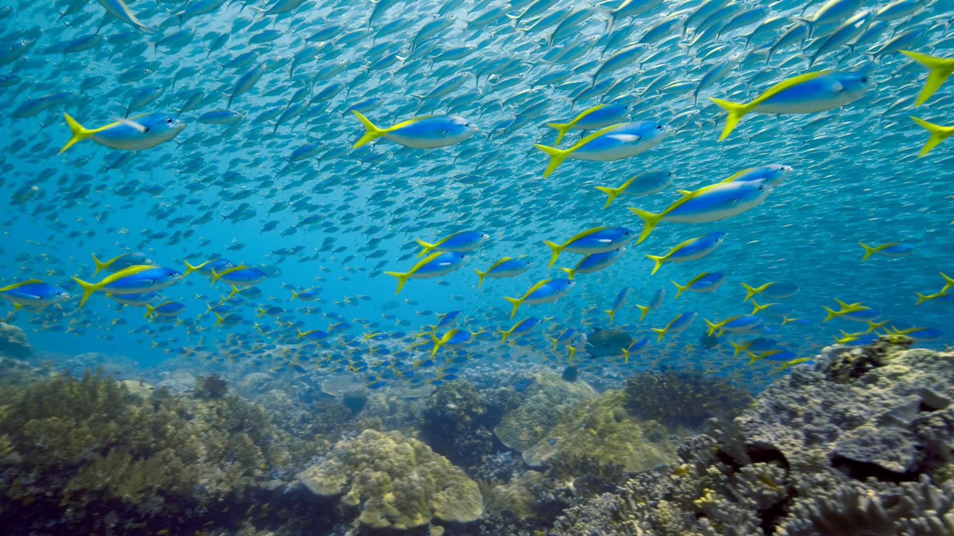 Boundaries Netflix: Fischschwarm