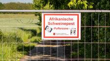 Zaun Deutschland Polen Schweinepest