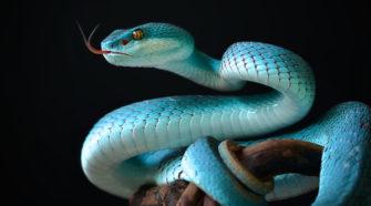 Schlangen: Warum ist die Zunge gespalten? Was und wie fressen sie? Was tun nach einem Biss? Erstaunliche Fakten und Wissenswertes