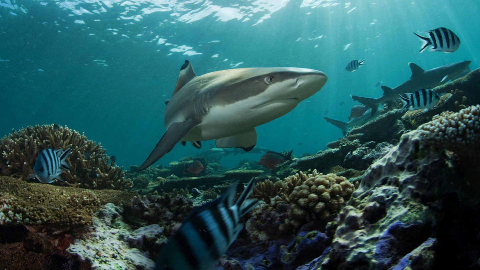Haie und ihr Imagewandel: Vom gefährlichen Raubfisch zum faszinierenden Wesen