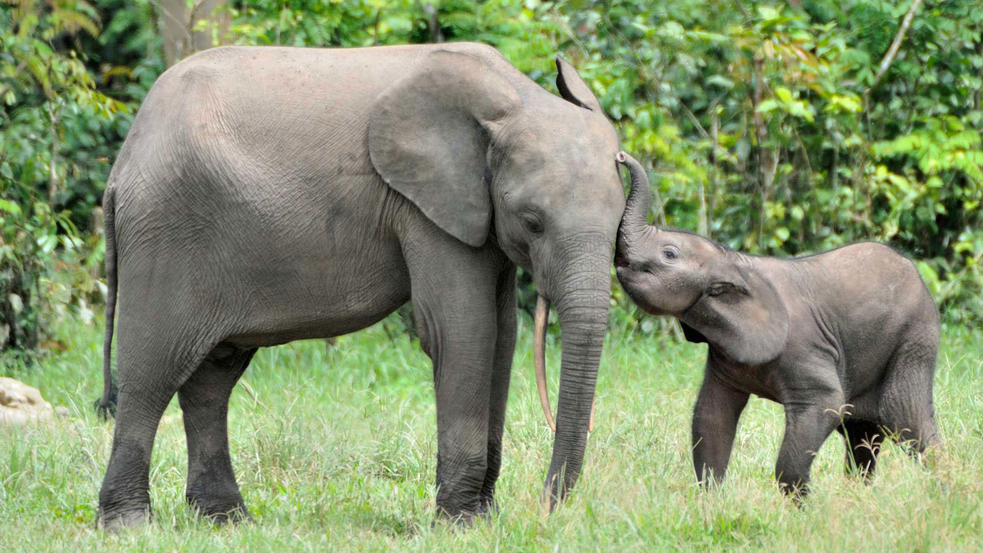 Wie kann man die Elefanten schützen?