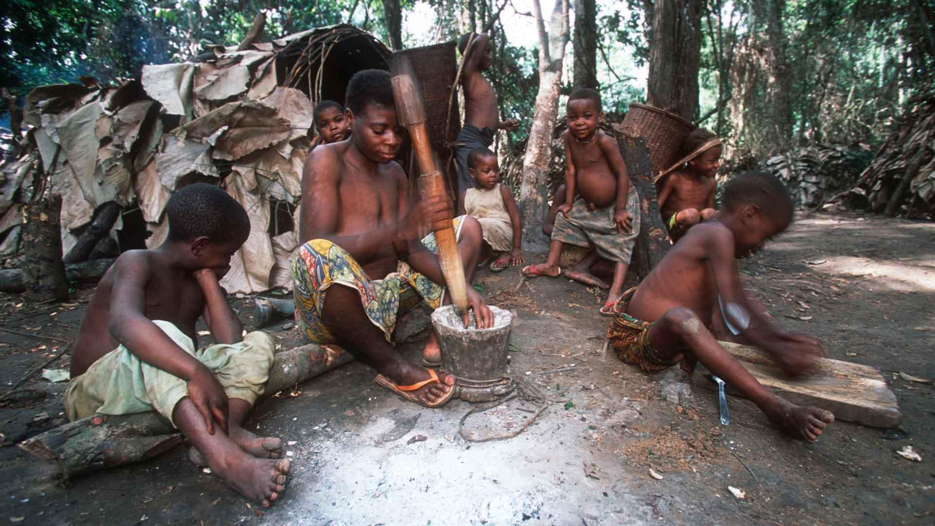 Weltwald Baka im WWF Projektgebiet Dzanga Sangha