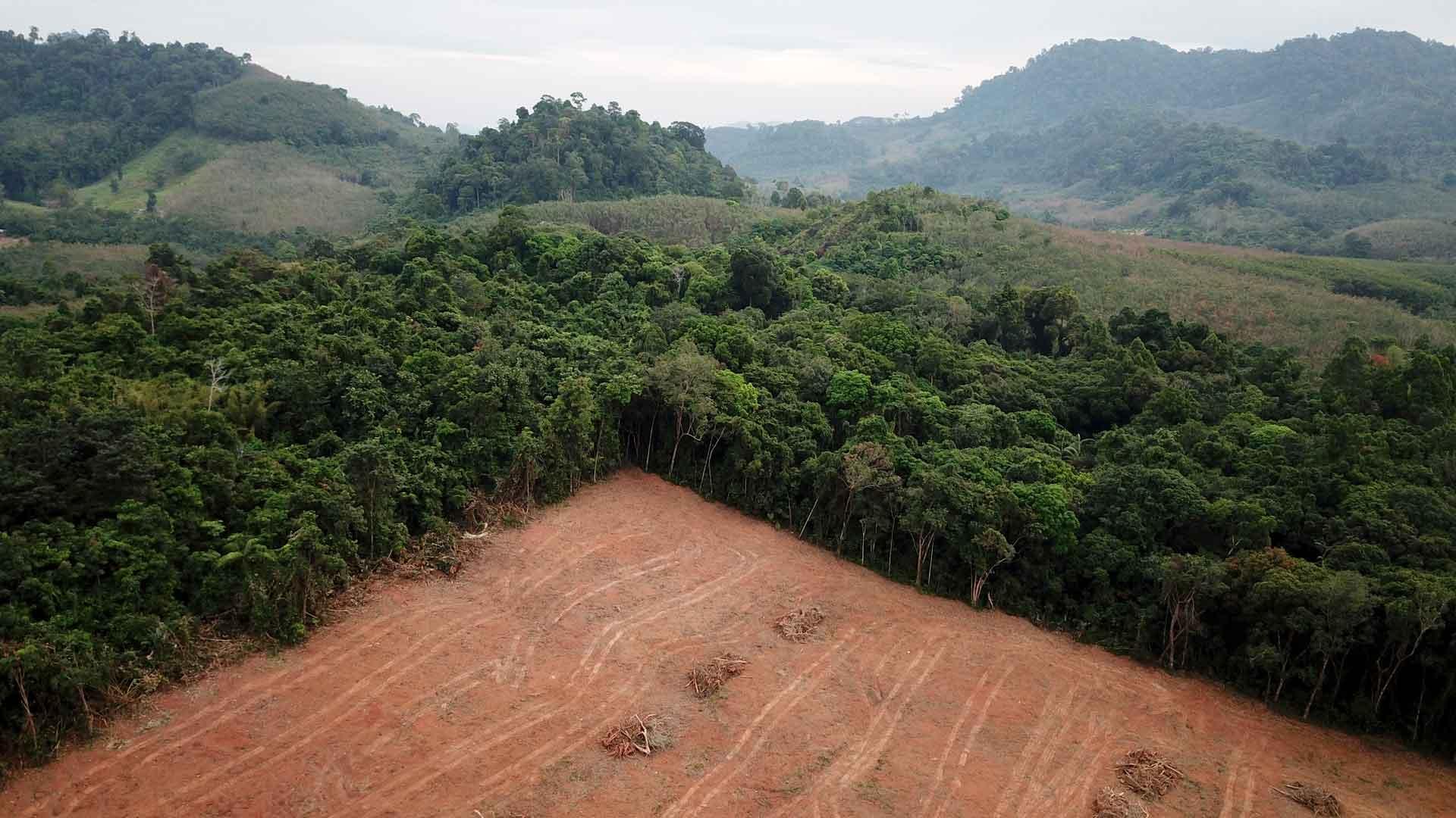 Weltwald Abholzung von Wäldern auf Borneo