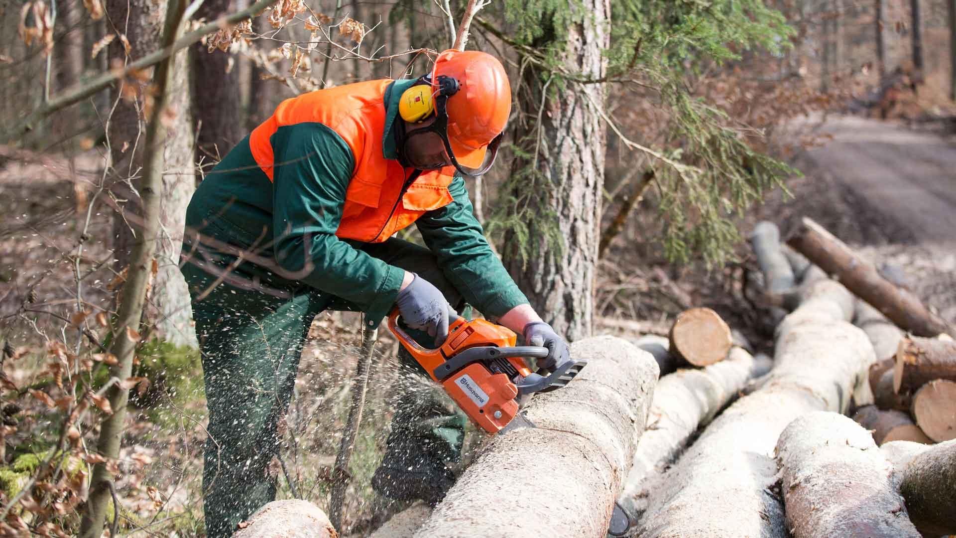 Weltwald Waldarbeiter