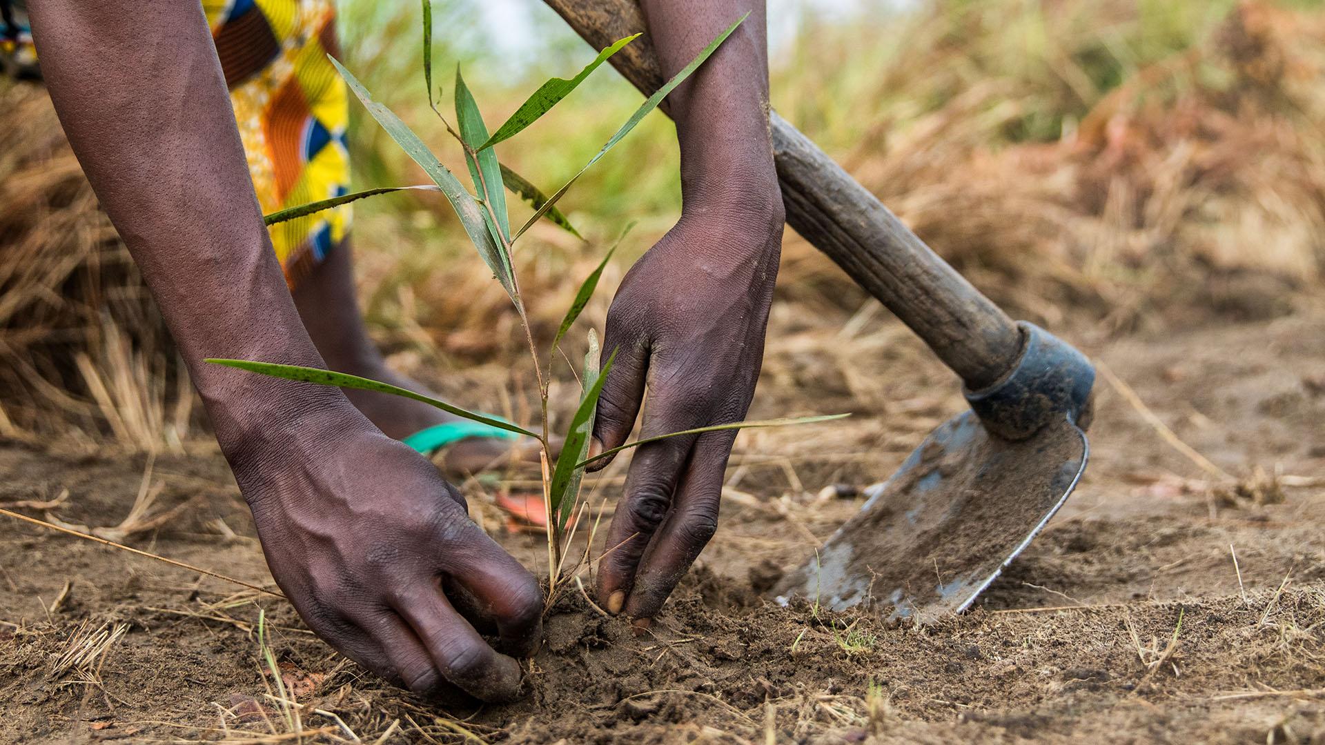 Kleinbauern Ernährungsgipfel UN UNFSS