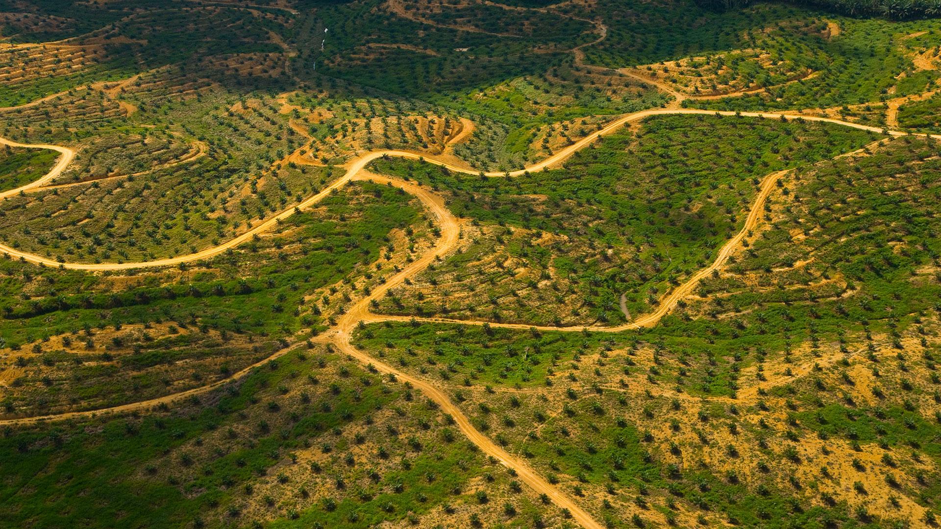 Palmöl Plantage Luftbild