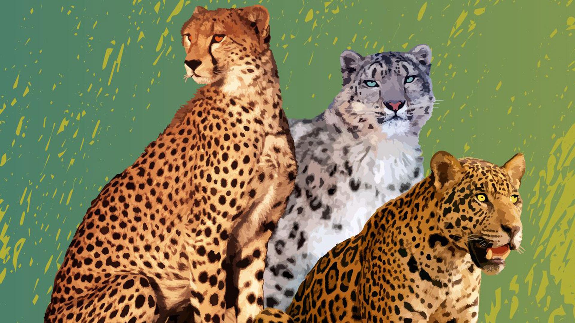 Wie können wir die Jaguare schützen? Warum sind sie wichtig?