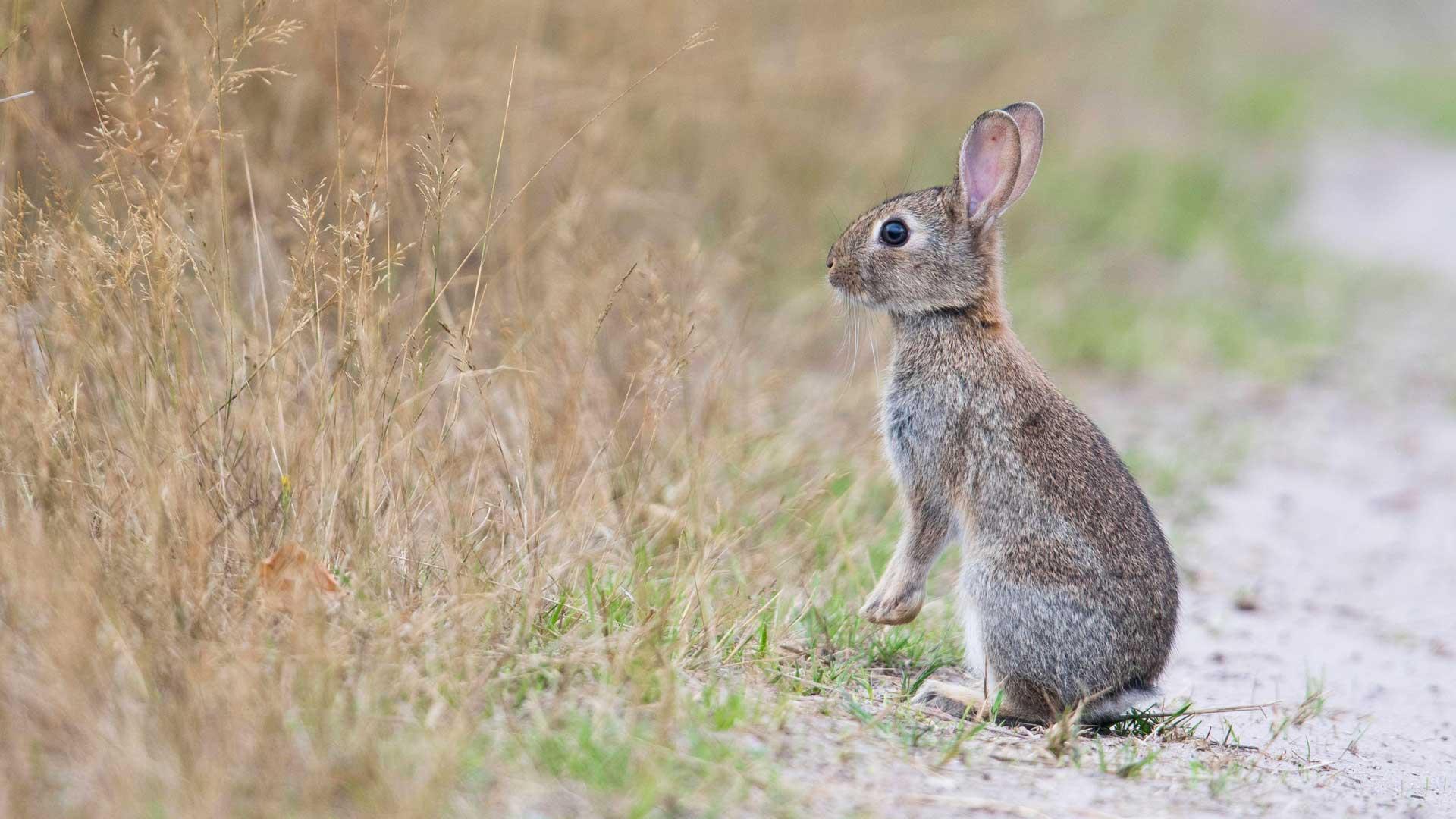 Sind Hasen und Kaninchen verwandt? Wie unterscheiden sie sich?