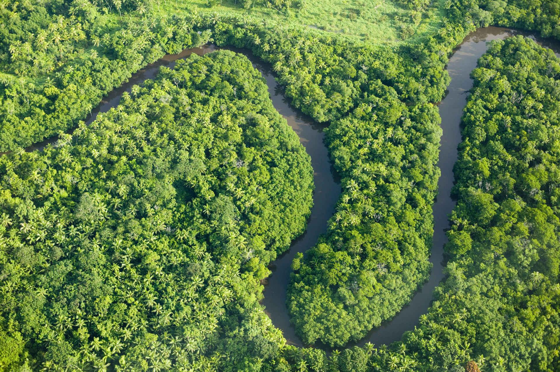 Luftaufnahme Fluss und Regenwald auf Fiji